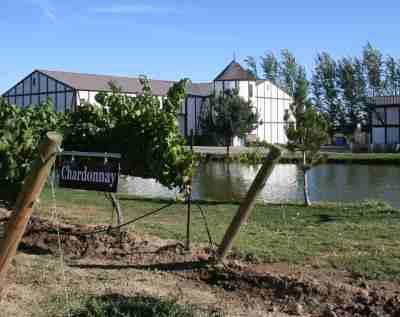 Chardonnay grapes growing at Bonair Winery